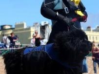 cheryl-dog